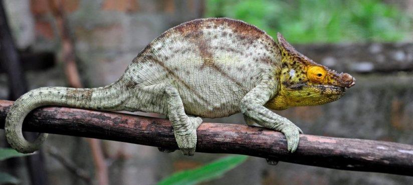 Madagaskar-2-507_bearbeitet-1