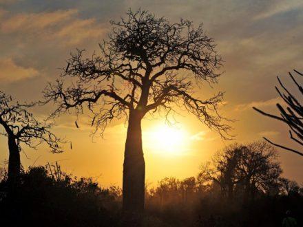 Madagaskar-5-479_bearbeitet-1